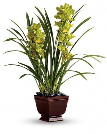 Teleflora's Splendid Orchids Plant