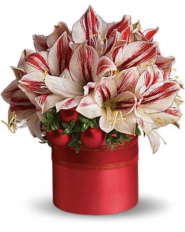 Teleflora's Peppermint Amaryllis Bouquet