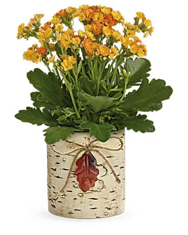 Teleflora's Living Autumn Kalanchoe Plant Plant