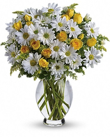 Teleflora's Amazing Daisy Bouquet
