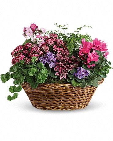Simply Chic Mixed Plant Basket Basket Arrangement