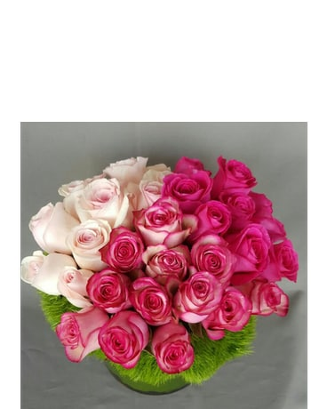 Pink Couture Roses