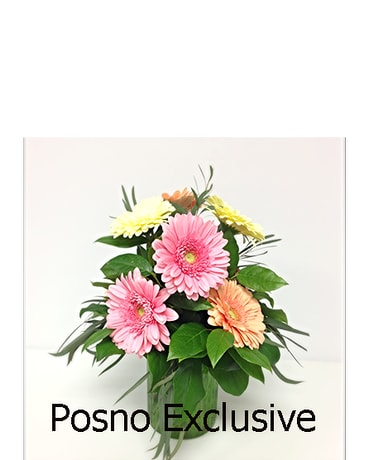 Gerbera Daisies Arranged