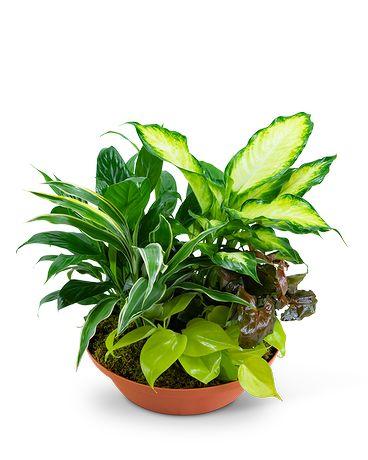 Tropics in Terracotta Flower Arrangement