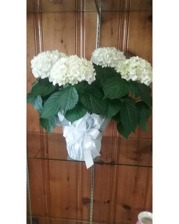 White Hydrangea Plant Custom product