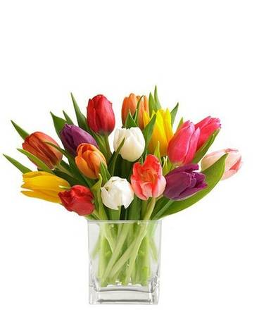 Cube of Mixed Tulips Flower Arrangement