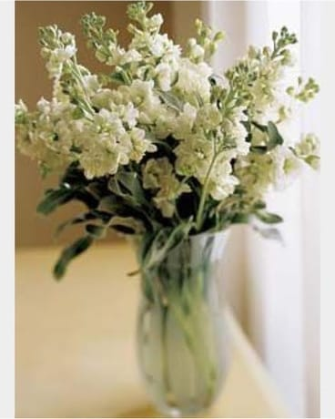 Fresh Picks - White Stock Flower Arrangement