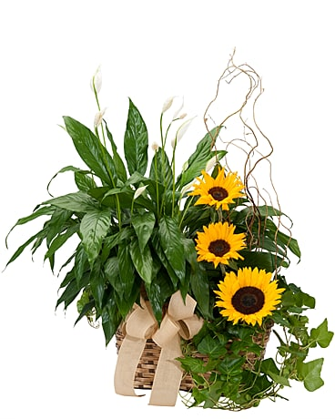 Plants and Sunshine Flower Arrangement