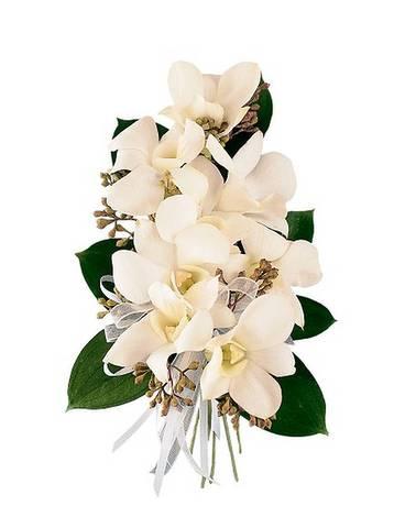 White dendrobium corsage in spokane wa appleway florist greenhouse white dendrobium corsage flower arrangement mightylinksfo