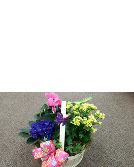 Woodland's Own Bright Plant Basket