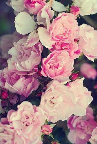 обои на айфон 5s цветы № 56777  скачать