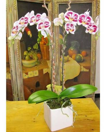Orchids Custom product