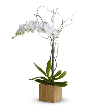 Bamboo Shangri-La Flower Arrangement
