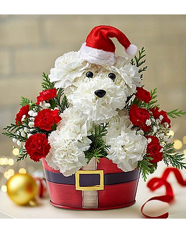 Santa Paws from 1800flowers