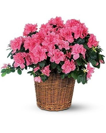 Pink Azalea Flower Arrangement
