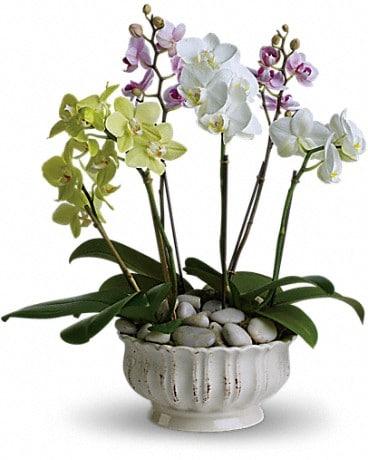 regal orchids in lehigh acres fl priceless flower shop