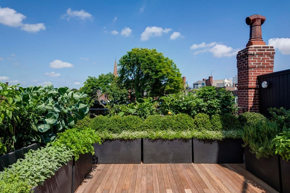Beacon-Hill-Vegetable-Garden
