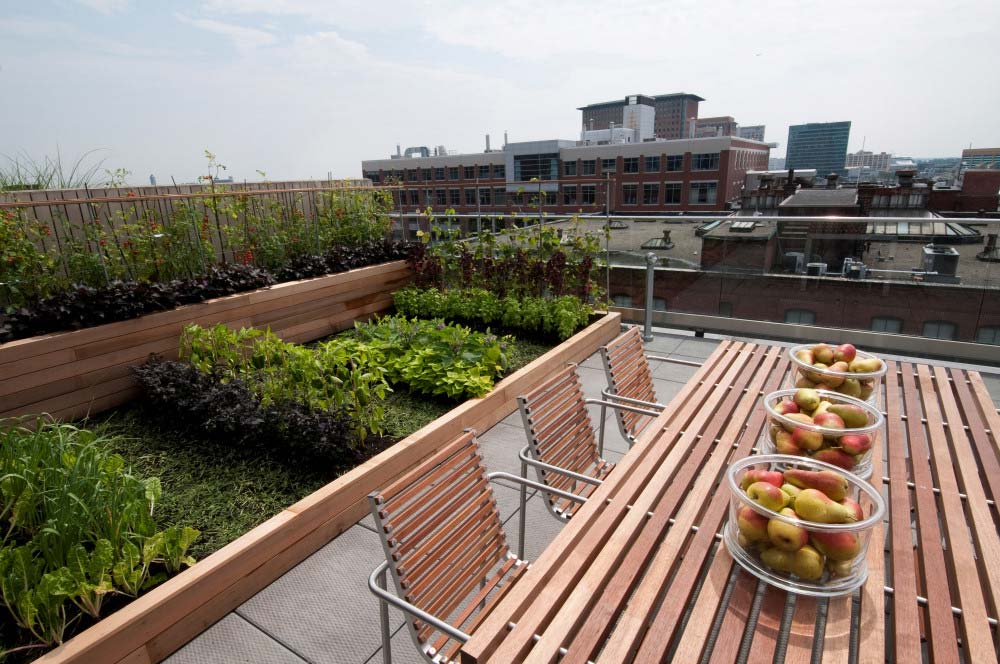 Rooftop-Vegetable-Garden