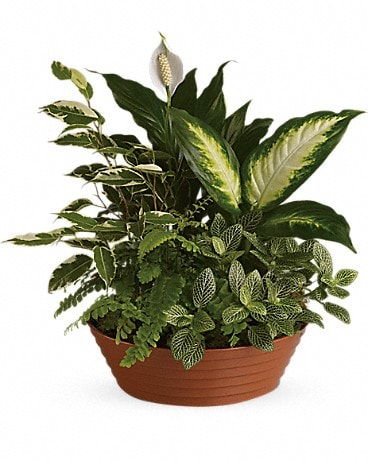 Serene Retreat Medium Dish Garden Plant