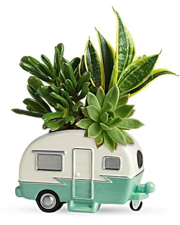 Father's Day Flower Delivery - Teleflora's Cool Camper Succulent Garden