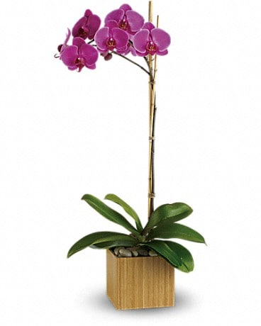 Irene's Imperial Purple Orchid