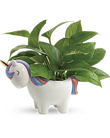 Peaceful Unicorn Pothos Plant Bouquet