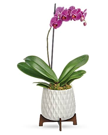 Architectural Orchid Planter Bouquet