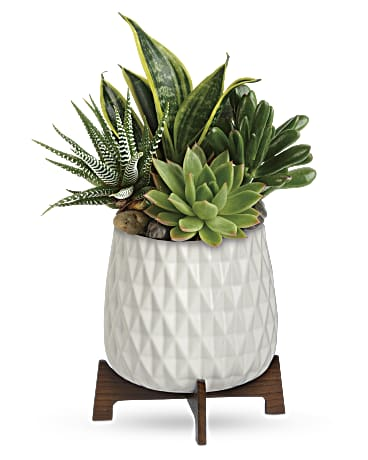 Modern Mood Succulent Garden by Granbury Bouquet
