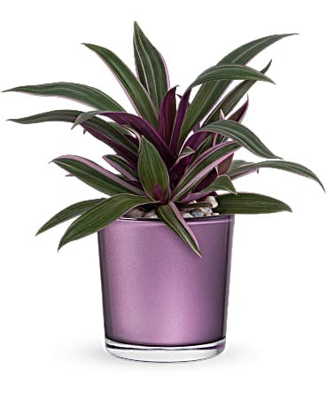 Teleflora's Leaves of Amethyst Plant