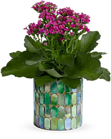 Teleflora's Memorable Mosaic Plant Plant
