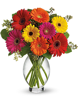 Gerbera Daisy Brights - Bouquet