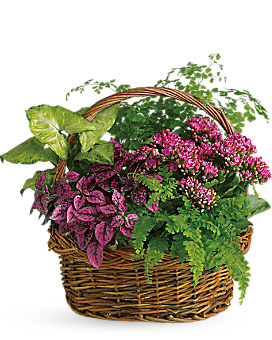 Secret Garden Basket - Plant