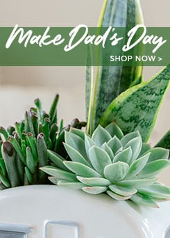 Send Father's Day Flowers & Plants