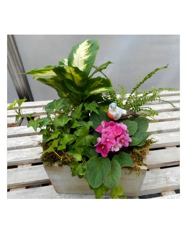 African Violet and Mixed Plants