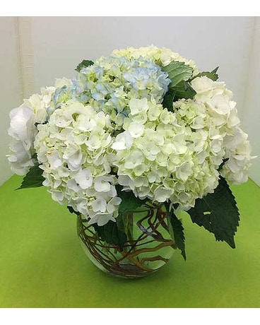 Bowl of Hydrangeas