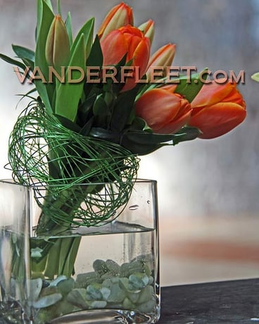 Orange Tulips Modern Floral Design