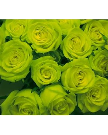 Green 1dz Long Stem Roses