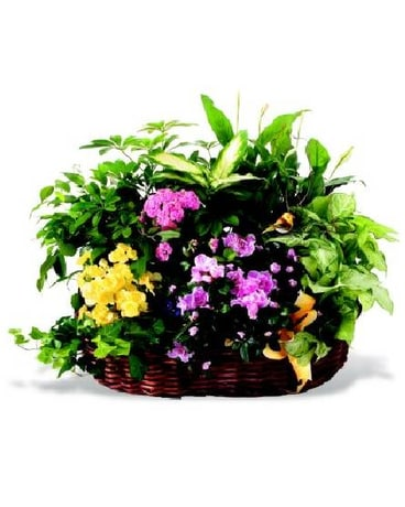 Matilda's Garden Starting at $124.95
