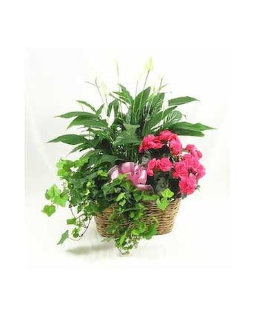 Mother's GardenPrices from $64.95