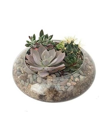 Succulent In Lotus Bowl