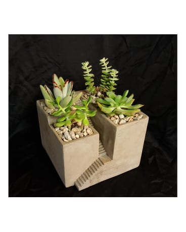 Architectural Succulents