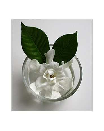 Gardenia in a Fish Bowl