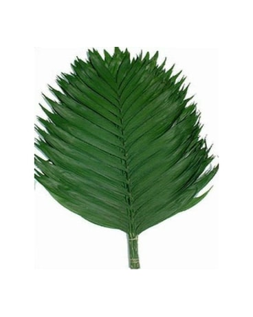 Emerald Palm Leaves