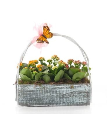 Buds and Blooms Kalonchoe Trio Basket