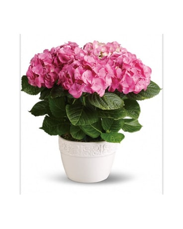 Hydrangea - Pink - Read Description
