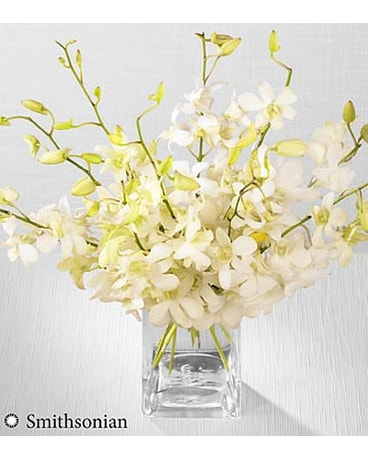 White Whispers Dendrobium Orchid Bouquet