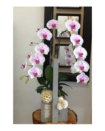 Pink White Orchid 1