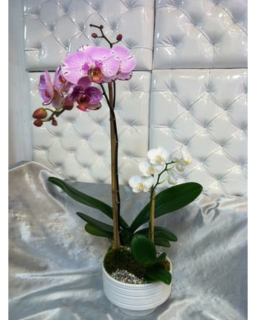 Pink-Orchid-2