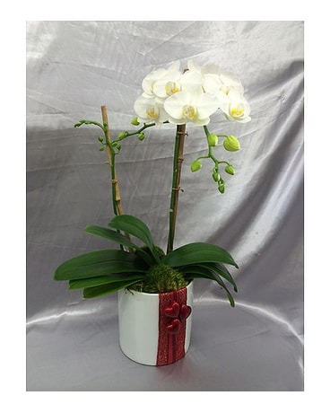Mini White Orchid