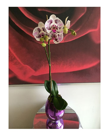 Variegated Orchid 2